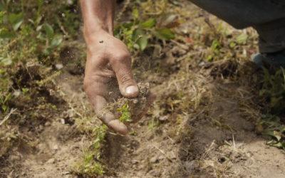 #4 – Travail du sol : le coup de la panne (de tracteur)