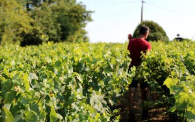 «La vigne, c'est un engagement pour la vie»