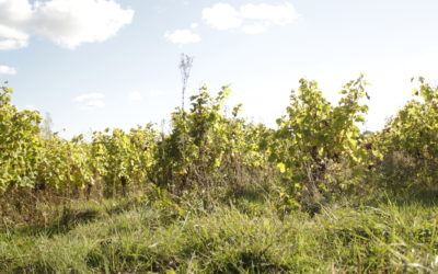 Dix ans de vin bio [CARTE]
