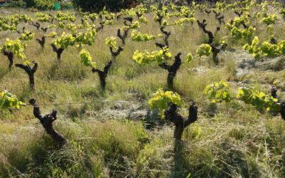 La Loire, le covid et les vignerons naturels (et le point sur le moral des troupes)